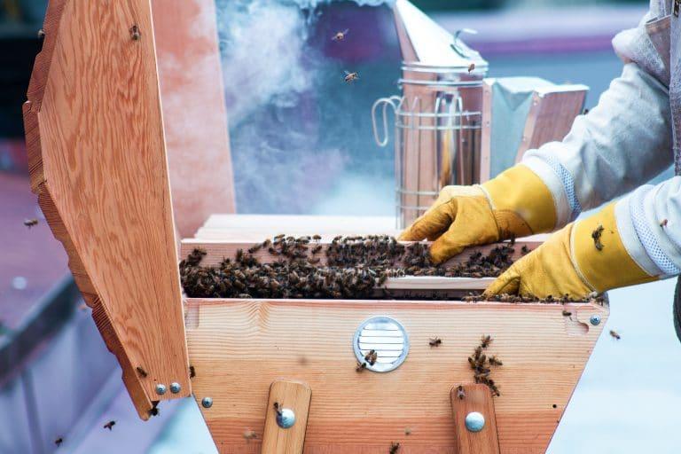 Bienenstock und Imker