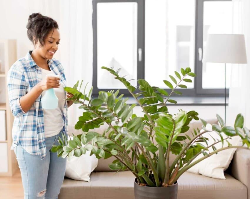 pflanzen mit alkohol reinigen