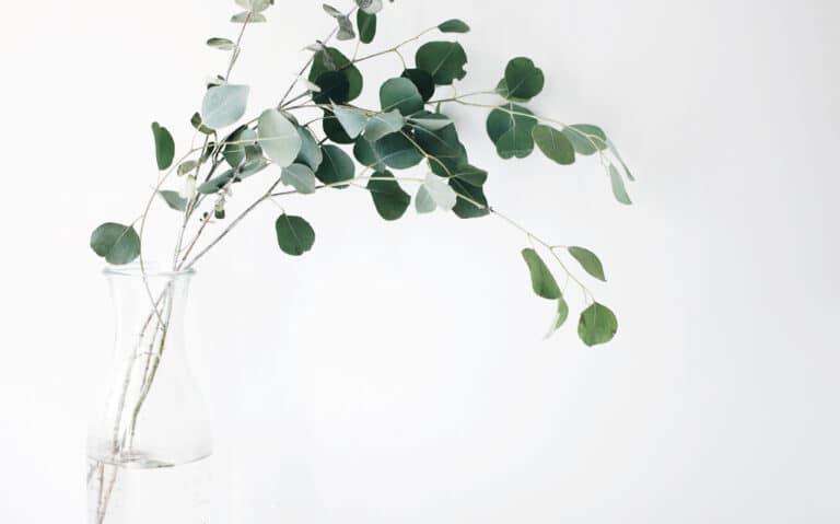 Natural-Beauty-Pflanze