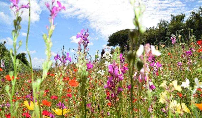 Wiese mit bunten Blumen und Gräsern
