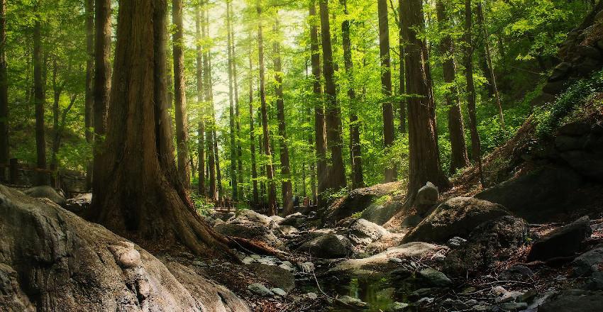 Bäume, kleiner Fluss und Steine in tropischem Wald
