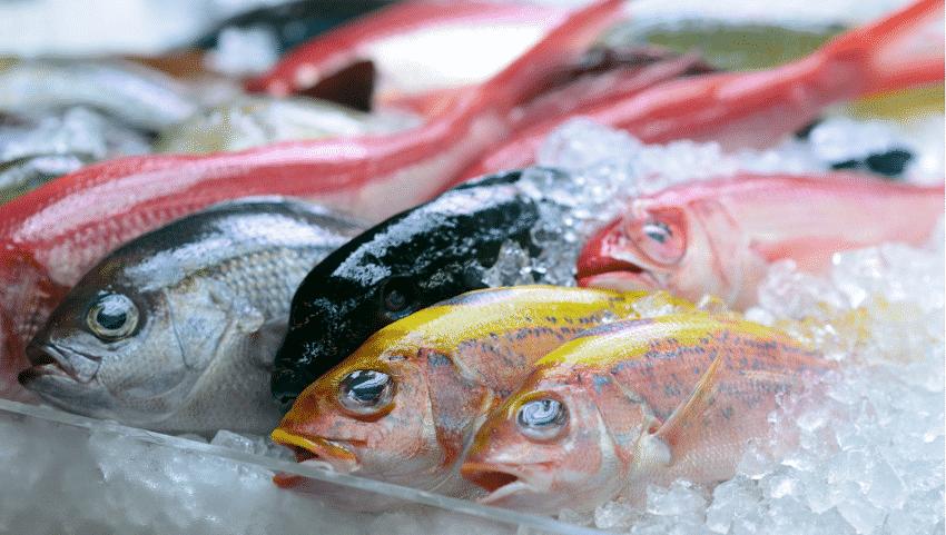verschiedene rohe Fische auf Eis