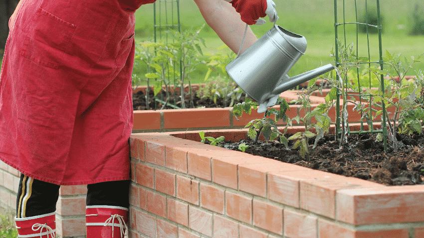 Person gießt Pflanzen im Hochbeet