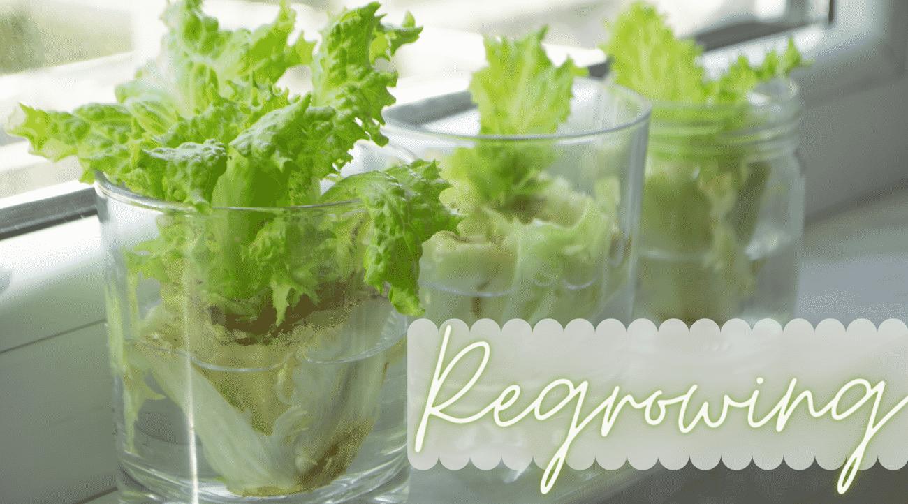 Drei Gläser mit Wasser und Salatsrunk auf Fensterbank