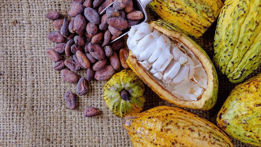 Kakaofrüchte, teilweise geöffnet, und Kakaobohnen