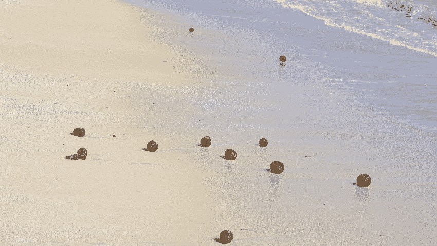 Seegrasbälle am Strand