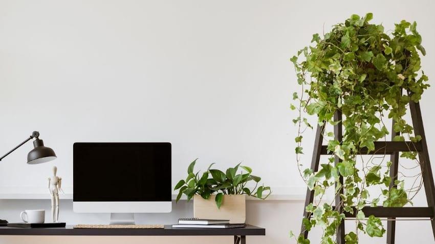 Arbeitsplatz mit Bildschirm, Lampe und Holzleiter mit Efeu im Topf